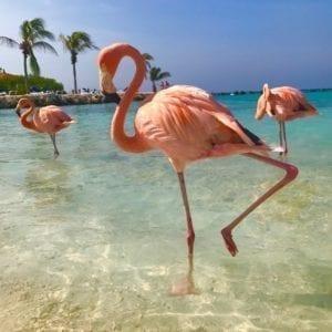 Flamingo Rubber Multigel